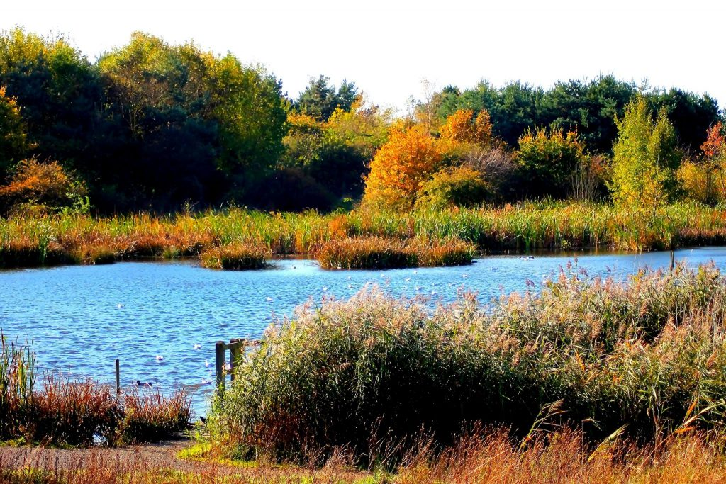 A lake in Drinkfield Marsh Nature Reserve
