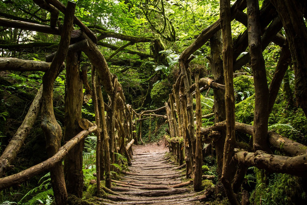 A wooden bridge in the Forest of Dean